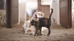 hund-katze-stallgasse-tierkommunikation-dog