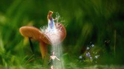 natur-elfen-fantasy