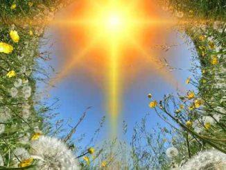 fuelle-natur-sonne-dandelions