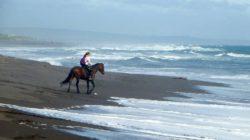 pferd-mensch-the-pacific-ocean