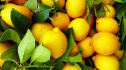 Naturwunder Zitrone