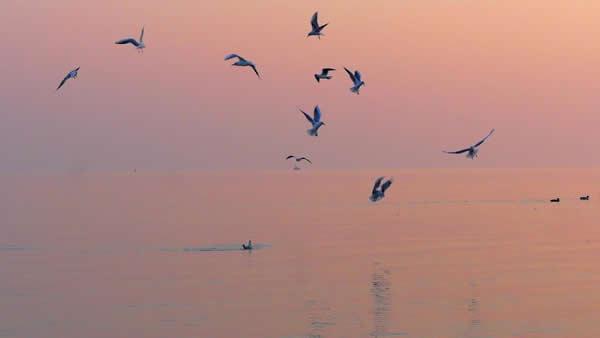 ramon-pachernegg-still-birds