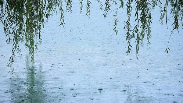 ramon-pachernegg-still-regen