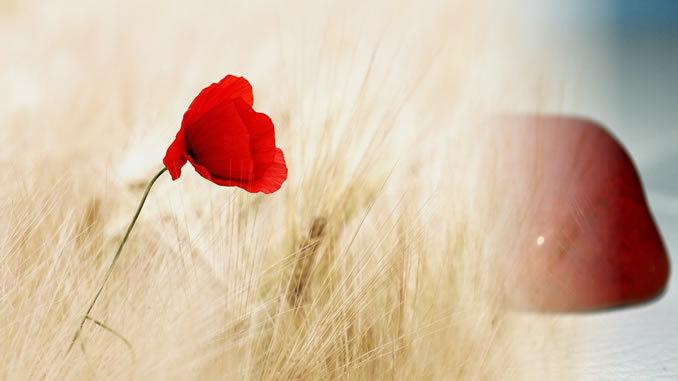 Mohn-jaspis-rot-flower