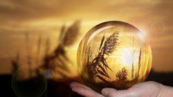 krise-kugel-natur-spiegelbild-ball