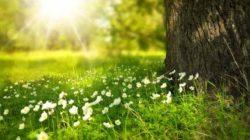 licht-natur-blumen-tree