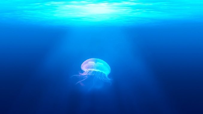 qualle-meer-jellyfish