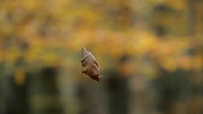 ramon-pachernegg-still-blatt
