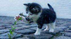 Lebensaufgabe deines Tieres blume katze cat
