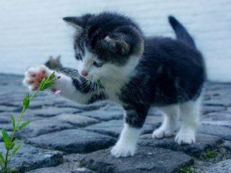 blume-katze-cat