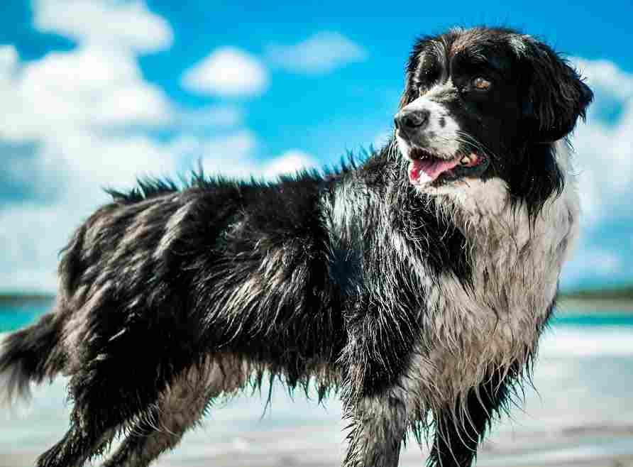 Tierkommunikationskurs hund Tierkommunikation Yvonne Sebestyen