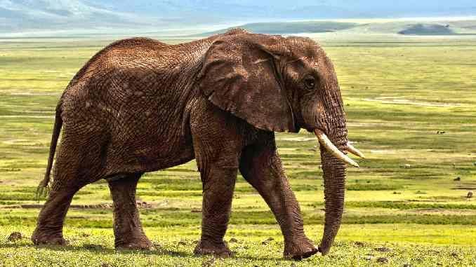 elefant-elephant