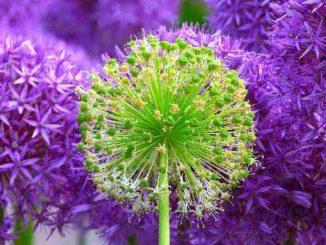perfekt-blumen-flowers