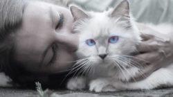 frau katze stressmomente tierkommunikation cat