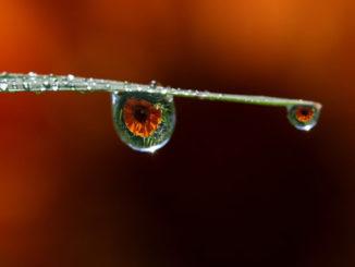 tropfen auge drops