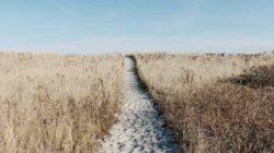 Muster zoom bessen prairie