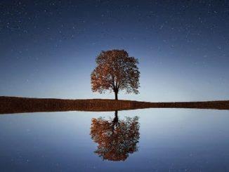 stille baum wasser natur tree