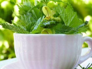 wildkraeuter-ayurveda-tasse-cup