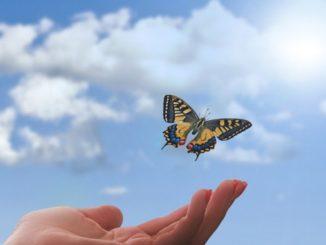 Schmetterling Arten von Spiritualitaet hand