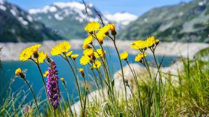 ayurveda-kraut-gewuerze-blumen-flower