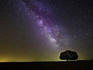 baum kosmos tree
