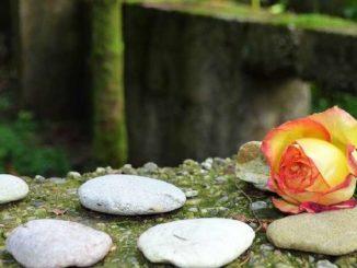 rose steine concentration camp