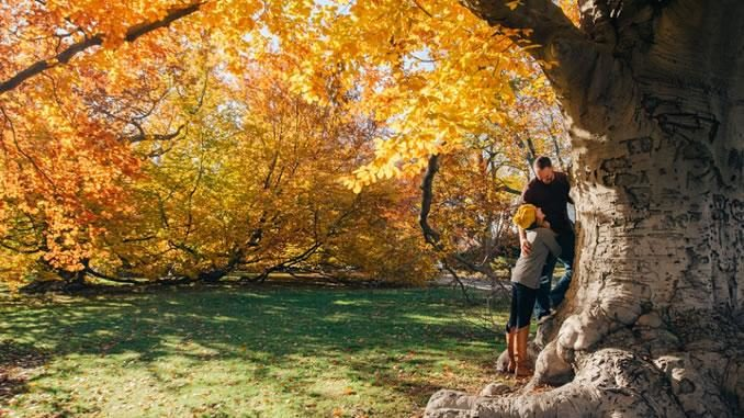 herbst paar baeume tree