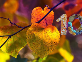 herbst-blaetter-autumn-leaves