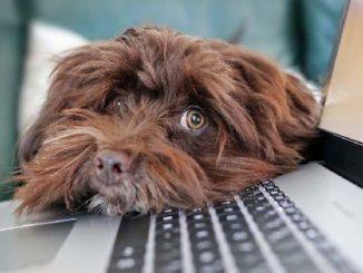 hund laptop tierkommunikation dog