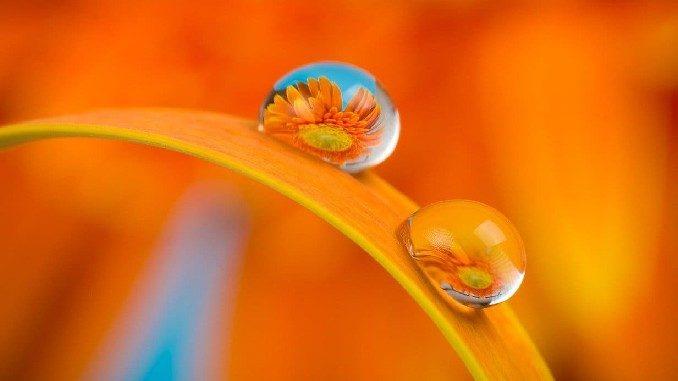 tropfen blumen verbundensein flower